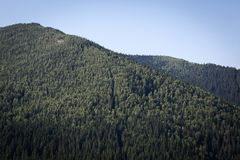 Summer landscape in Carpathians Stock Photography