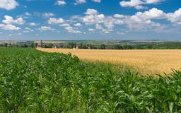 Summer landscape in central Ukraine Stock Image