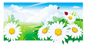 Summer landscape with a chamomile. Royalty Free Stock Photos