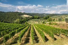 Summer landscape in the Chianti region Tuscany Royalty Free Stock Image