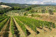 Summer landscape in the Chianti region Tuscany Stock Photos