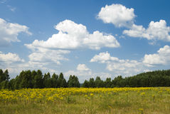 Summer landscape with clouds Stock Image