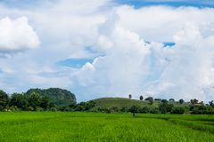 Green field on a cloudy day. Royalty Free Stock Images