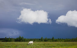 Summer landscape, cloudy, white clouds over the field Royalty Free Stock Photo