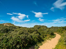 Summer landscape at the coast Royalty Free Stock Images