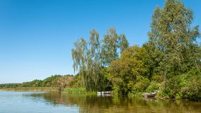Summer landscape. coast of the lake with trees, shrubs and reeds under a clear blue sky. Beautiful summer landscape. picturesque coast of lake with shallow Royalty Free Stock Photography