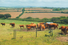 Summer landscape in Cornwall, UK Stock Photos