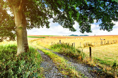 Summer landscape with country road Royalty Free Stock Images