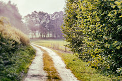 Summer landscape with country road Stock Images