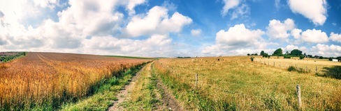 Summer landscape with country road Royalty Free Stock Image