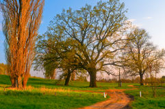 Summer landscape - country road and old oak Stock Photography