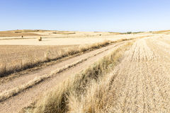 Summer landscape with a country road on a summer day in Mosterales plain Tierra de Campos, Burgos, Spain Royalty Free Stock Images