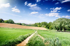 Summer landscape with countryside fields Stock Images