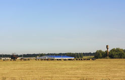 Summer landscape with cows Royalty Free Stock Photos