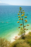 Summer landscape of croatia Royalty Free Stock Photo