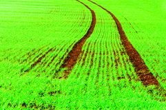 Summer landscape with curved tracks in green field Stock Image