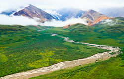 Summer landscape, Denali National Park, Alaska Royalty Free Stock Photos
