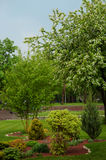 Summer landscape design park with trees and plants Stock Images