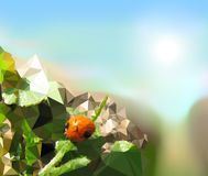 Summer landscape with dusty road and ladybug. Ladybug sitting on a leaves next to the road in fields Royalty Free Stock Photography