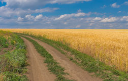 Summer landscape with an earth road and ripe wheat field near Dnipro city. Central Ukraine Stock Photo