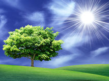 Summer landscape, eco green concept. Stock Photography