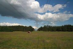 Summer landscape with electricity pylon. Beautiful summer landscape with cows and high voltage electricity pylon Royalty Free Stock Photos