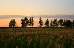 Summer landscape in the evening Royalty Free Stock Photography