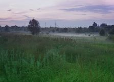 Summer landscape with an evening mist over a green lawn. stock image