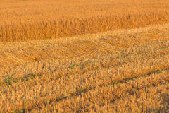 Summer landscape with farm fields Royalty Free Stock Image
