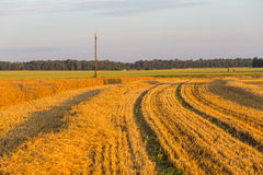 Summer landscape with farm fields Stock Photo
