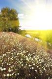 Summer landscape field Stock Photos