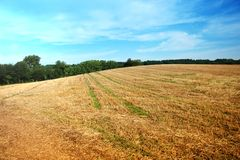 Summer landscape field. Summer landscape with yelow field Stock Image
