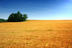 Summer landscape field. Summer landscape with yelow field Stock Photography