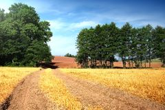 Summer landscape field. Summer landscape with yelow field, road and clouds Royalty Free Stock Photo