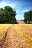 Summer landscape field. Summer landscape with yelow field, road and clouds Royalty Free Stock Photos