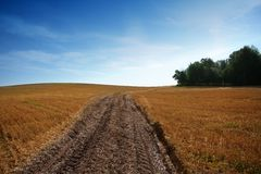 Summer landscape field. Summer landscape with yelow field, road and clouds Royalty Free Stock Image