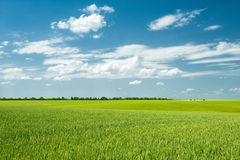 Free Summer Landscape. Field And Clouds Stock Photo - 31305250