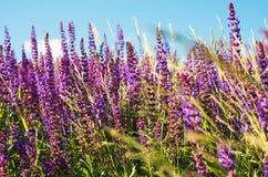 Summer landscape Royalty Free Stock Photos