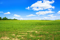 Summer landscape with a field, blue sky and white clouds royalty free stock images