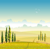 Summer landscape - field, cypress and cloud. Vector illustration. Summer  landscape with green cypress, field with red flowers and cloudy sky. Natural Royalty Free Stock Photography