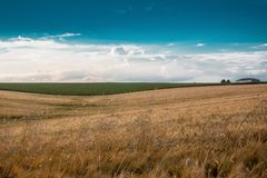Summer landscape, field with ears of wheat, sky with clouds_ stock photos