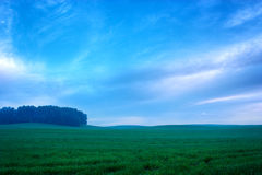 Summer Landscape with Field at the Evening Stock Photography