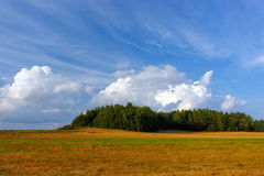 Summer landscape with a field and forest Royalty Free Stock Photos