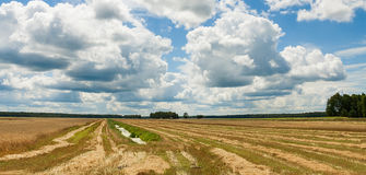 Summer landscape with field harvest. And large overhanging clouds Royalty Free Stock Photo