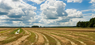 Summer landscape with field harvest. And large overhanging clouds Royalty Free Stock Photography
