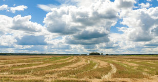 Summer landscape with field harvest. And large overhanging clouds Royalty Free Stock Photos