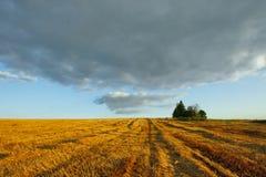 Summer landscape Royalty Free Stock Images