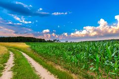 Summer landscape with field under cloudy sky Stock Images