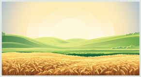 Summer landscape with field wheat. Summer landscape with a field of ripe wheat, and hills and dales in the background Stock Photos