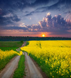 Summer Landscape with a field of yellow flowers Royalty Free Stock Image
